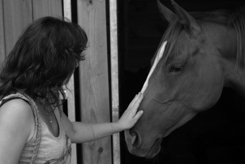 Hébergement chevaux